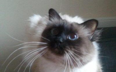 Le marketing des chats vous réserve des surprises !